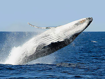 Winter Whale Watching 'N' Wineries Tour