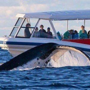 Whale Watching n Wineries