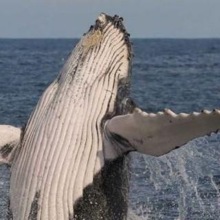 Whale Watching Season is Underway